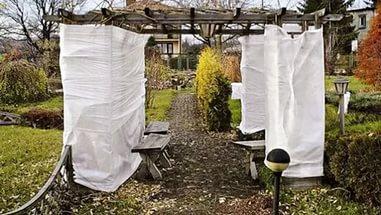 Укрываем кустарники на зиму
